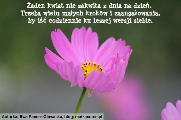 Kartka_08_Kwiat